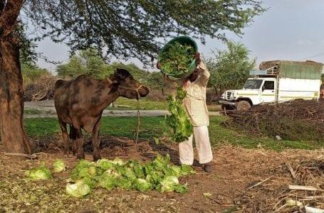 Global farmers loom at heavy losses amid largest Coronavirus lockdown