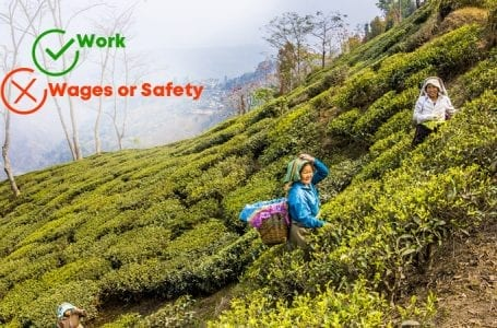 Plight of Tea Plantation Workers Hits a New Low With Pandemic Lockdown