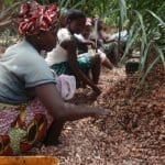 Decade Long Lawsuit Against Cocoa Child Labour To Be Dismissed In America