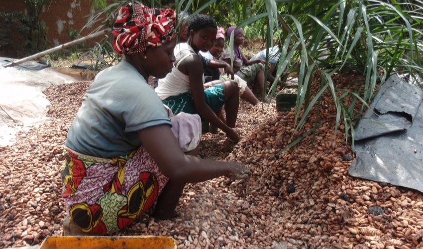 Cocoa Child Labour
