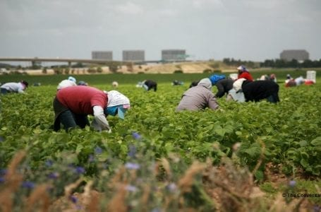 Foreign farm workers in Canada mistreated during pandemic