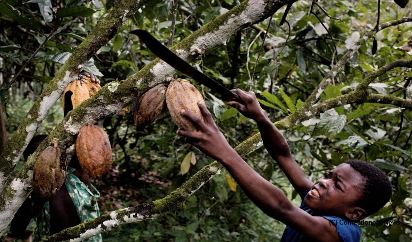 Cocoa business, Ghana, Ivory coast, child labour, Labour rights