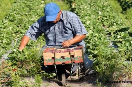 Canada to improve conditions for migrant farm workers