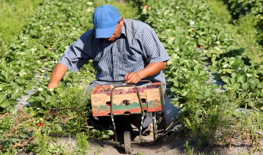 Canada-to-improve-conditions-for-migrant-farm-workers