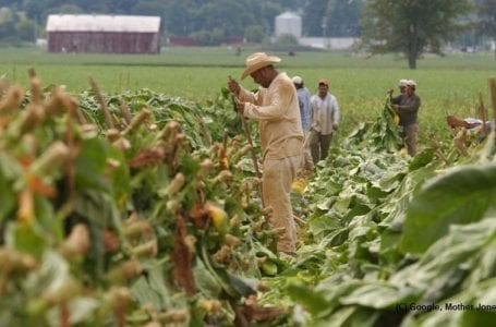 Wages of farm labourers frozen by Trump administration, not-so known rule will bring years of suffering for migrant workers in US