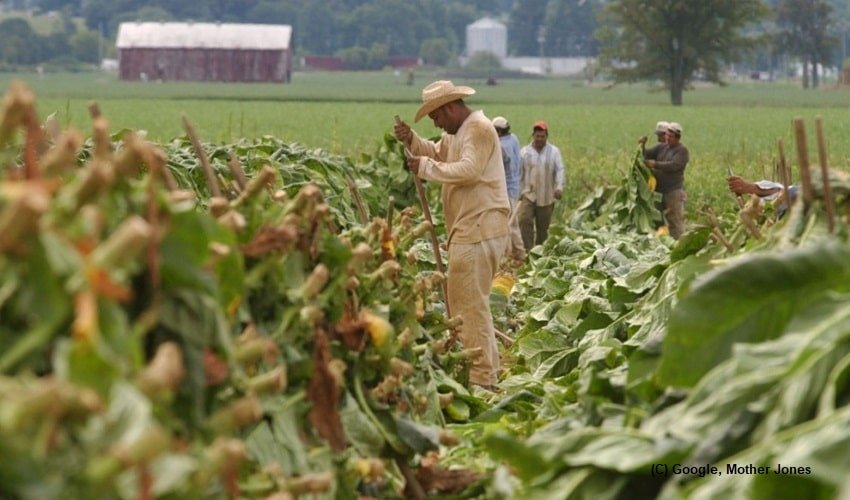 Wages-of-farm-labourers-frozen-by-Trump