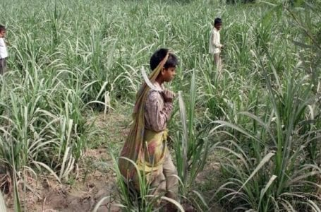 60% child labor in Gujarat's sugarcane fields unpaid: Report