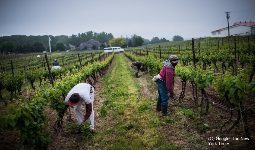 Aberrant-situation-of-migrant-workers-in-Canada