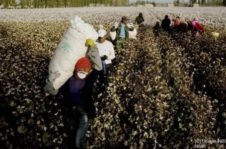 How China Uses Minority Groups As Forced Cotton Labour