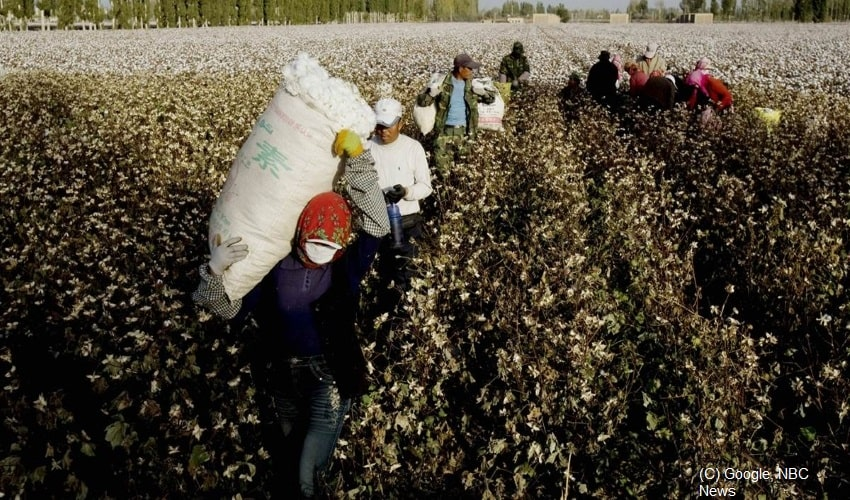 How-China- Uses-Minority-Groups-As-Forced-Cotton-Labour