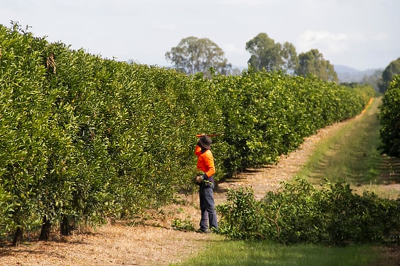 australian migrant workers face poor condition and low wages on the farms