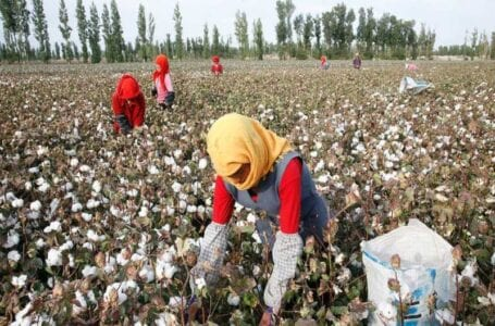 Human Rights Watch urges brands to boycott goods from Xinjiang