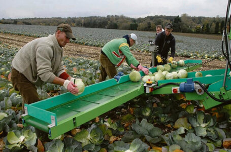 British Farms Willing To Pay Huge For Migrant Workforce To Return