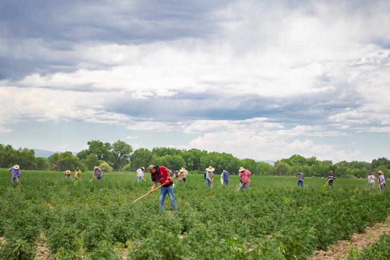 colorado farm workers
