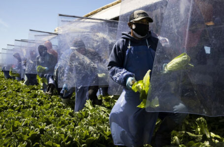 Farmworkers insist for basic safety measures as heatwave beats most parts of the US
