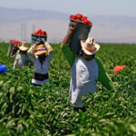 farmworkers_salinas_california