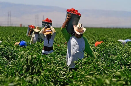 """""""Are Farmworkers really safe in California's Salinas?,"""" Labor rights activists questions"""