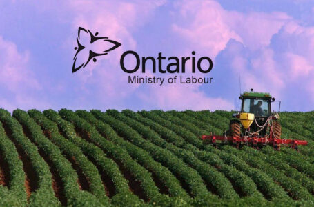 Ontario Ministry Of Labour Files Cases Against Farm Owners Exploiting Migrant Workers