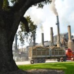 the lawsuit filed in western louisiana claims sterling sugars sales corporation obtained work visas representing the six as farm workers.