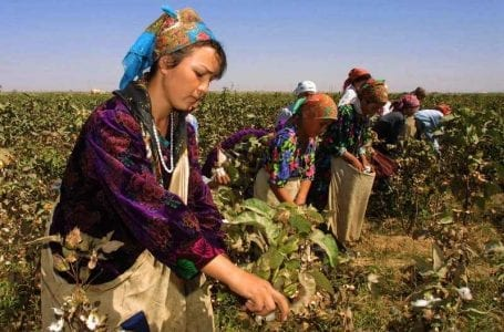 Uzbek Cotton Frees Children From Forced Labour, Finally!