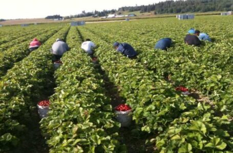 Washington State in the US passes historic overtime bill: equal labor rights for agriculture workers